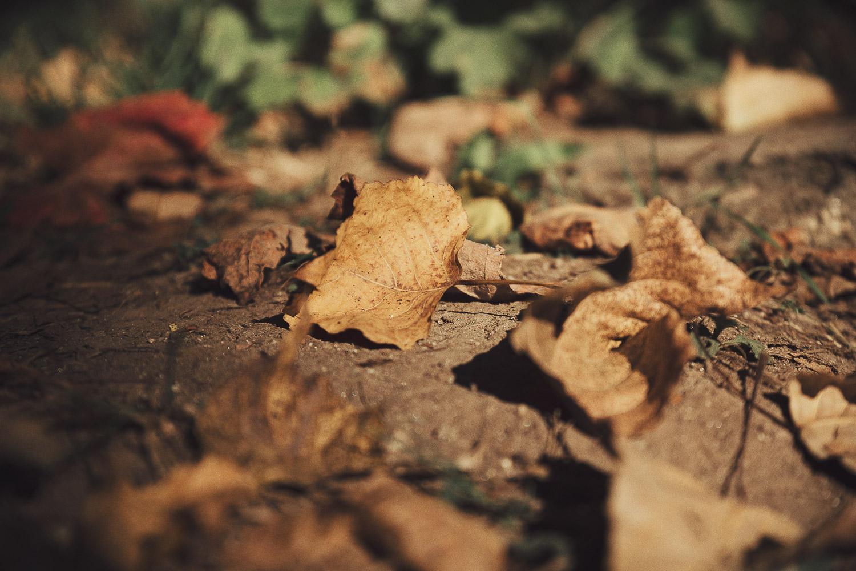 Fotografias de natureza